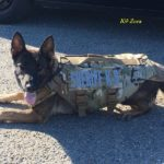 Queen Anne's County Sheriff's Office K9's Bella & Zora have received body armor.